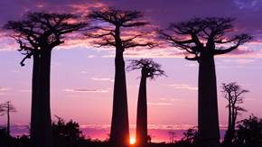 Madagascar Tour | Brightwater Holidays