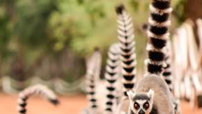 Madagascar Tour | Brightwater Holidays